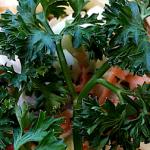 Darwins Most Delicious Coleslaw