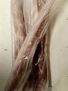 kangaroo tail darwin