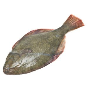 New Zealand Flounder
